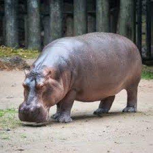 Apakah nama hewan di gambar ini, bahasa inggris nya adalah...
