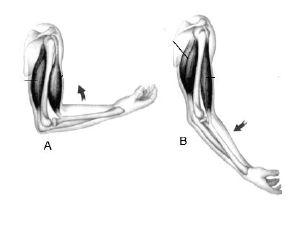 Gerakan tangan dari posisi A ke posisi B adalah akibat