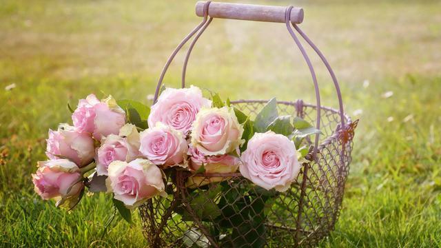 89+ Gambar Bunga Dan Bagiannya Paling Cantik