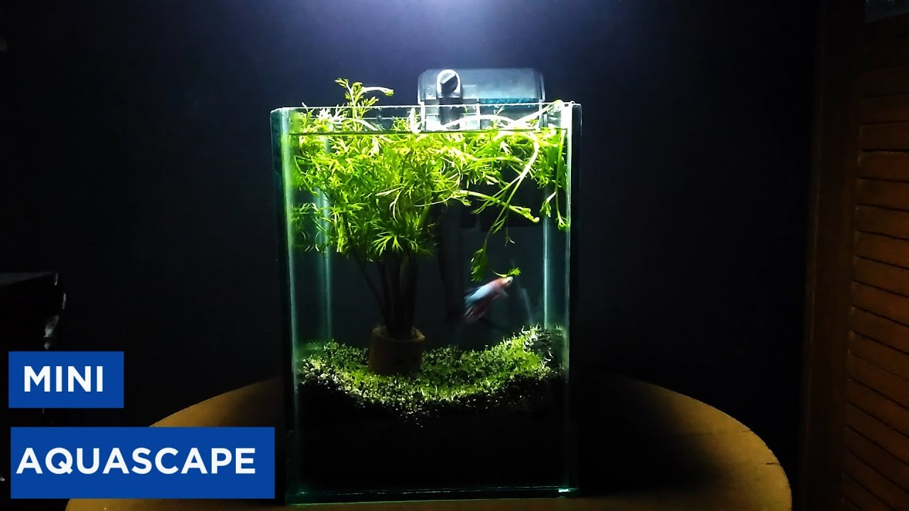 Membuat Aquascape Minimalis Begini Caranya
