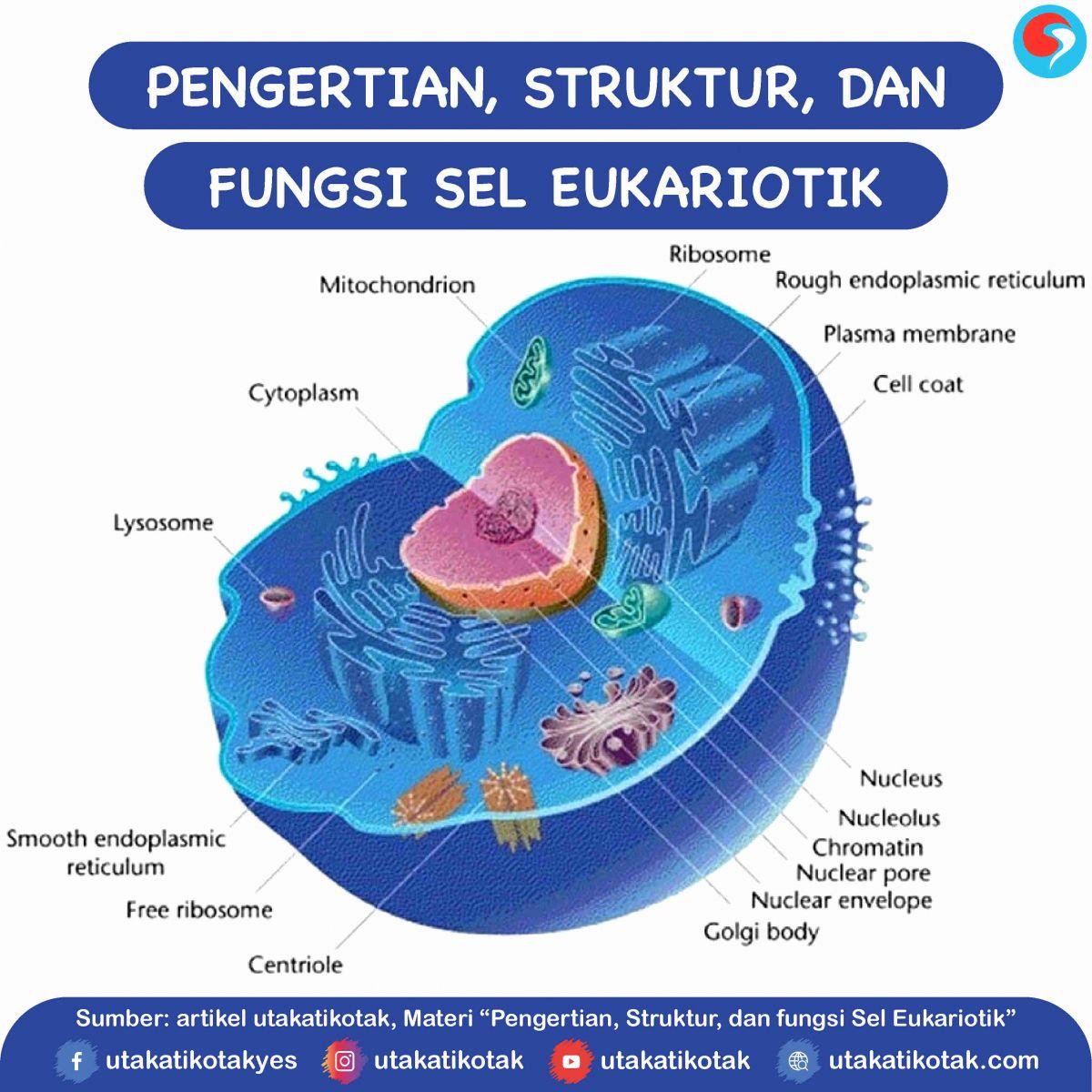 Pengertian Struktur Dan Fungsi Sel Eukariotik